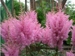 Названия садовых цветов