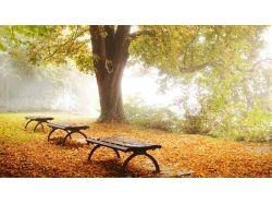 Картинки парк природа