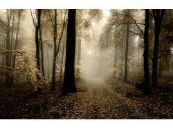 Природа дорога картинки