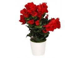 Красно белый цветок