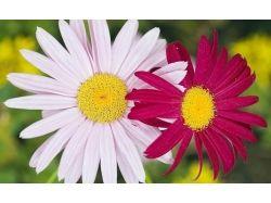 Два цветка фото