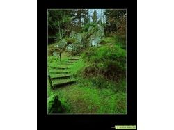Картинки природы фотографии