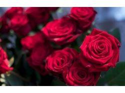 Картинки королева цветов