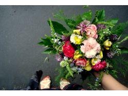 Многолетники фото цветов