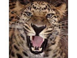 Самые необычные животные мира фото