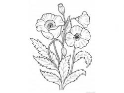 Картинки ваза с цветами раскраска