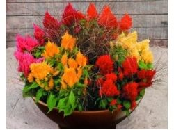 Картинки цветов букетов тюльпанов