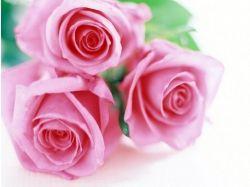Картинки букетов цветов красивые анимация