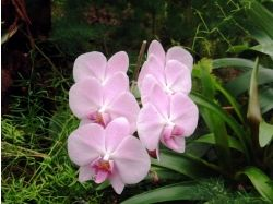 Фэнтези картинки цветы