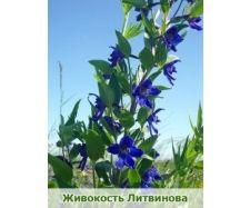Самый красивый цветок фото