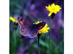 Роса на цветке картинки