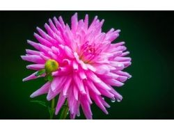 Картинки 1 цветок