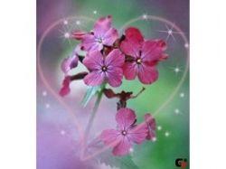 Романтические цветы картинки