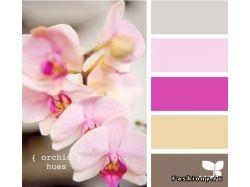 Сочетание цветов картинки