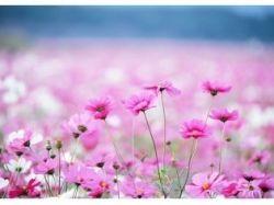 Картинки букетов цветов красивые розы