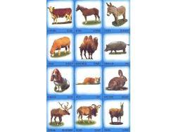Дикие и домашние животные картинки