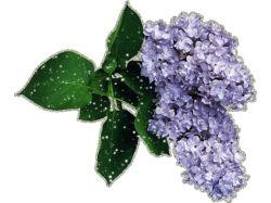 Картинки блестяшки цветы