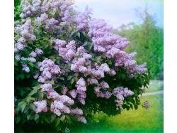 Виды цветов фото