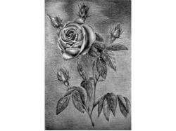Картинки цветов черно белые