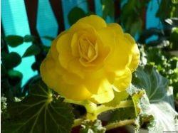 Блестящие цветы фото