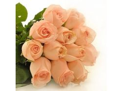 Цвет чайная роза фото