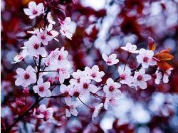Мебель цвет вишня фото 2