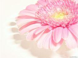 Картинки цветов в хорошем качестве
