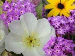 Листочки цветов картинки