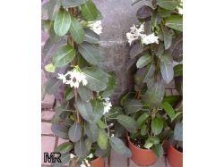 Цветы фото и названия уход