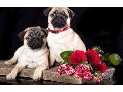Собаки и цветы картинки