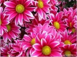 Красивые маленькие картинки цветы