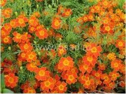 Фото 3 цветка