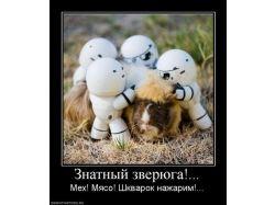 Новые прикольные фото животных
