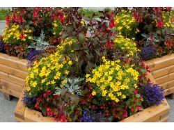 смотреть фото цветов на клумбах #10