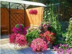 Картинки цветов лютиков