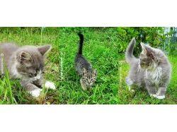 Бесплатные картинки на телефон животные