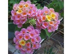 Каталог комнатных цветов с фото