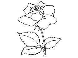 Картинки цветов срисовать