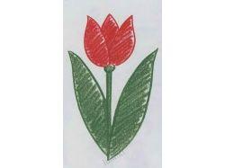Картинки цветов срисовать 8