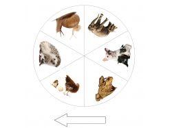 Животные картинки карточки