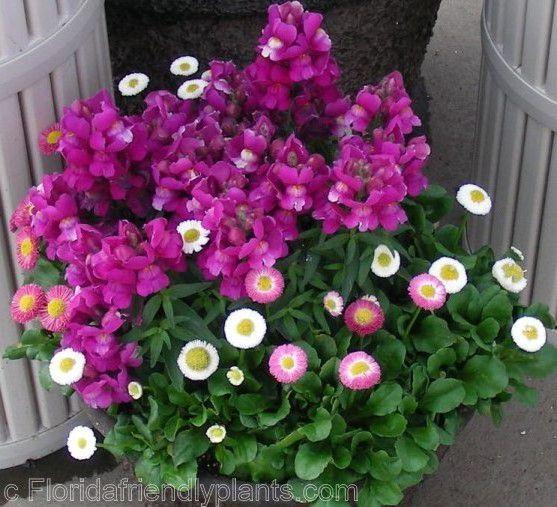 """Балконные цветы фото """" прикольные картинки.ру: обои для рабо."""