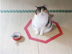 Фотки кошек прикольные