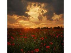 Цветы прекрасные картинки