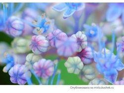 Фото очень красивых цветов