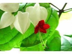 Домашний цветок счастья фото