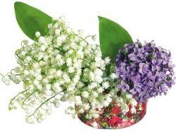 Картинки цветы гортензия