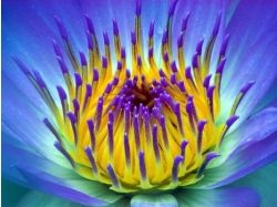 Поле красивых цветов картинки