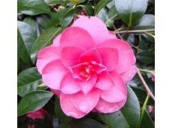 Посмотреть фото цветов