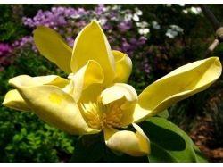 Посмотреть фото цветов 2