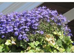Посмотреть фото цветов 3
